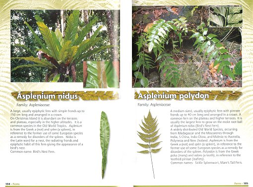 Native Plants Of Christmas Island Nokomis